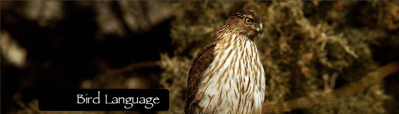 Bird-Language-slider-with-text